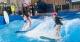 Oasis Surf