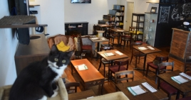 Café Chat l'Heureux